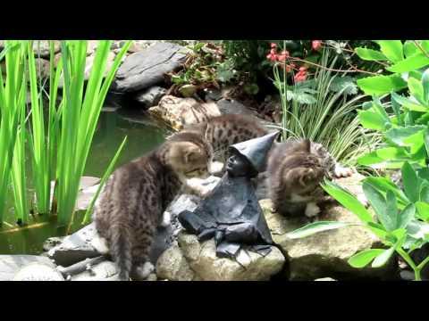 Junge Katzen Am Gartenteich