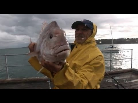 BIG SNAPPER OFF MORNINGTON PIER - YouFishTV
