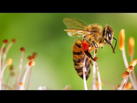NEUE Erkenntnisse zum Bienensterben! - Clixoom Science & Fiction