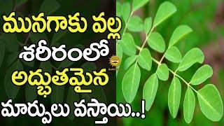 మునగాకు వల్ల కలగే లాభాలు తెలిస్తే ఆర్చర్యపోతారు | Benefits of Drumstick Leaves | Health Masters