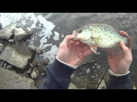 The GEO Report: January 3, 2012 Chicago River Black Crappie (Fishing video Reports)