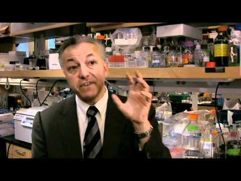 Bone Marrow Transplantation: The Procedure