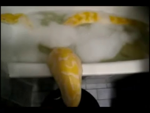 Bañando una serpiente gigante en MSN Video