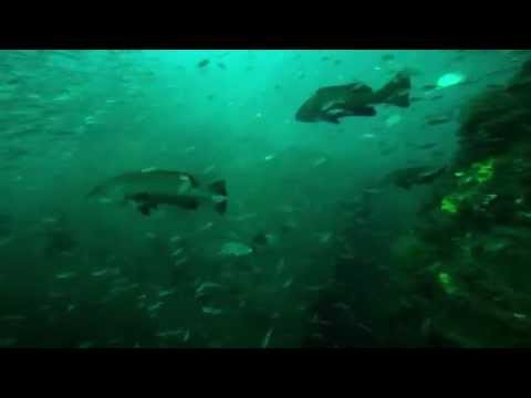 Diving with Sand Tiger Sharks on the WWII Casualty Caribsea
