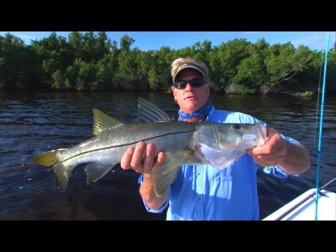 Sweetwater Snook - Awesome TOPWATER Explosions
