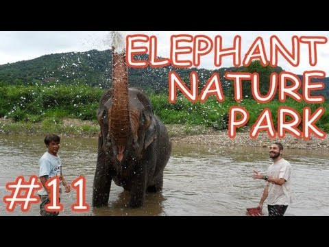 Amazing Thailand #11: The Elephant Nature Park