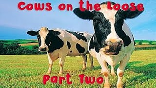 Cows on the Loose | Part Two | The Early Days | Gratass | Little Grey Fergie