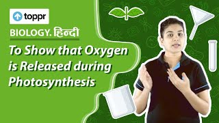 कक्षा 7 विज्ञान : प्रकाश संश्लेषण (Photosynthesis) | CBSE/NCERT