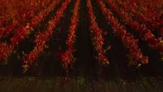 Fall Colors -- Jimtown California Vineyards