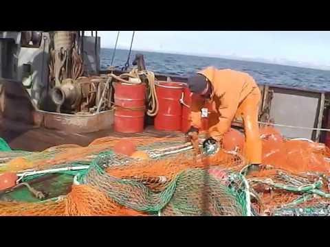 как ловить креветку в море в охотском море