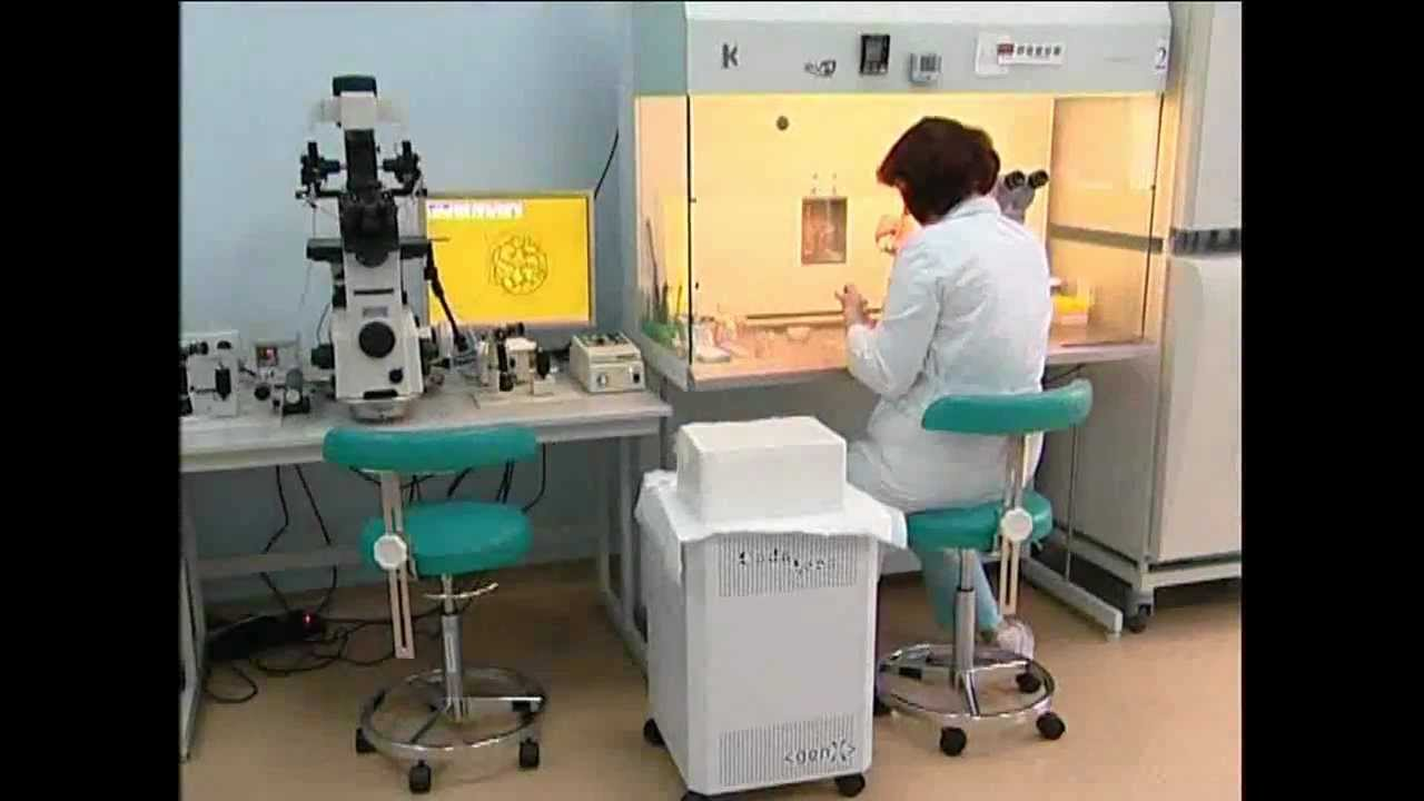 Эмбриоскопия фото
