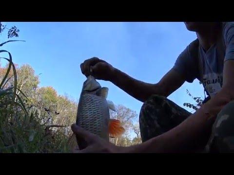 ловля крупного голавля