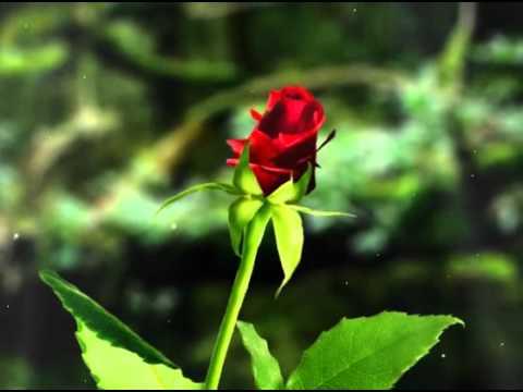 Love Ecard - Each day I love you more.mp4