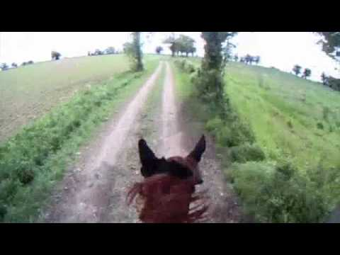 Hacking out in suffolk head cam horse riding virtual hack