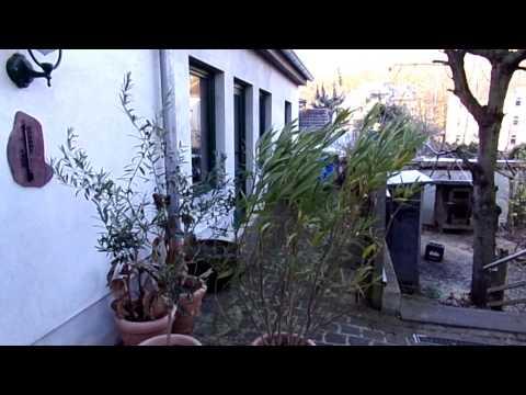 Oleander Und Olivenbäumchen überwintern. Eine Möglichkeit.