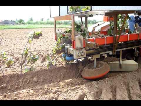 machine planting