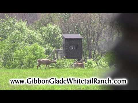 Gibbon Glade Whitetail Ranch Commercial