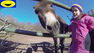Funny Videos kids at the Zoo