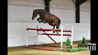 Kannan x Clearway Stallion Born 2016
