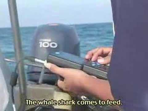 ProNatura Whale Shark Research