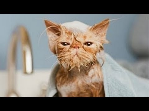 Cats in Water + Best Cat Vines Compilation 2014 / 2013