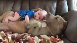 Hunde beschützen Kinder Baby und bewacht es das ist so lieb die verstehen sich einfach