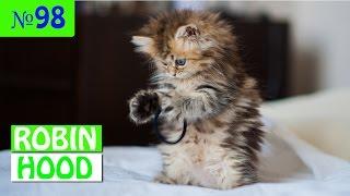 ПРИКОЛЫ 2017 с животными. Смешные Коты, Собаки, Попугаи // Funny Dogs Cats Compilation. Май №98