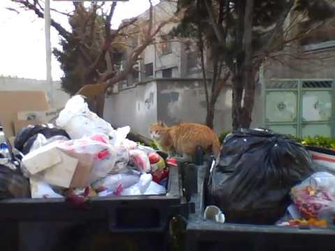Street Cats in Tehran