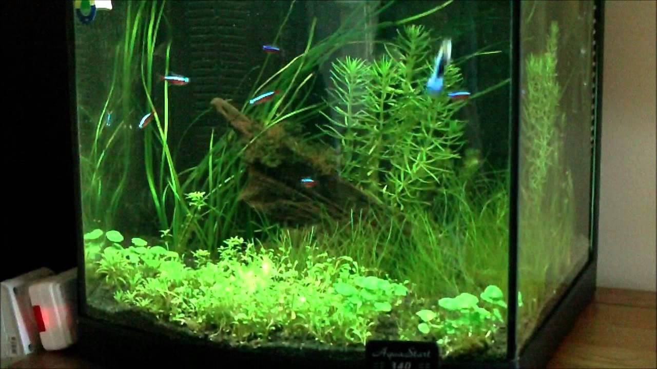 40 litre aquarium youtube. Black Bedroom Furniture Sets. Home Design Ideas