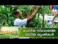 Nattupacha  Manorama News