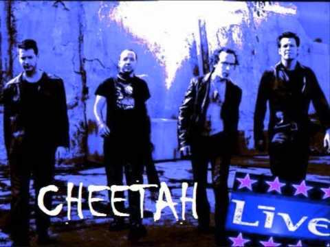 Live - Cheetah