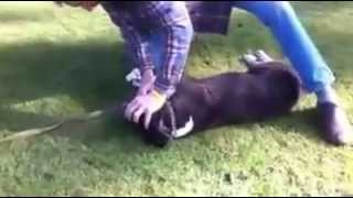 Köpeğe kalp masajı (   Amazing video of dying dog revived back to life by a stranger! )