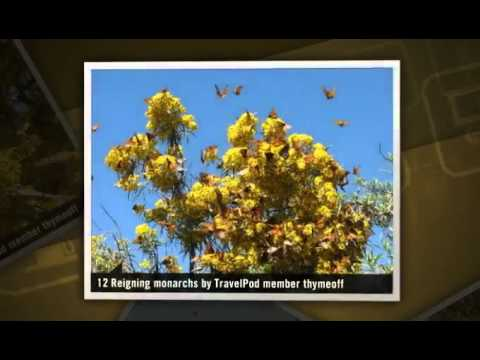 """The Mystery of the Monarchs"" Thymeoff's photos around Angangueo, Mexico (mystery of monarchs)"