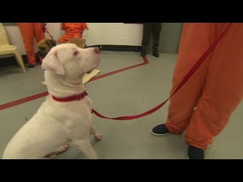 Pairing abandoned dogs with inmates