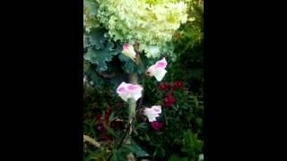 Flowers.../Natural Beauty/KTS Hazara,