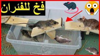 أسرع وأروع طريقة لصيد الفئران ☢ اصنع بنفسك افضل فخ للقضاء على فئران 💀 #3