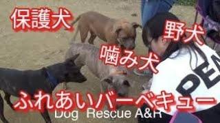 保護犬達とふれあいバーベキュー Dog  Rescue A&R
