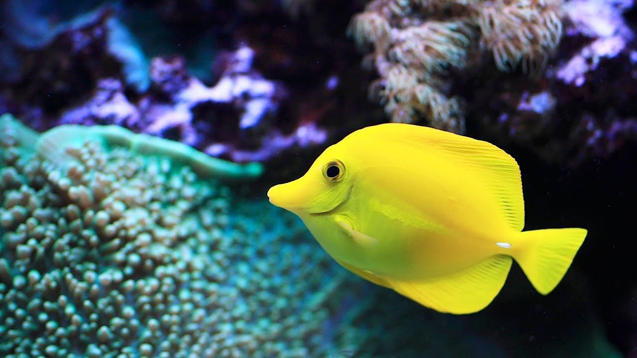 easiest saltwater fish to keep aquarium care youtube