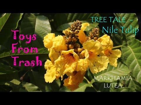 Tree Tale |  Nile Tulip | Bengali