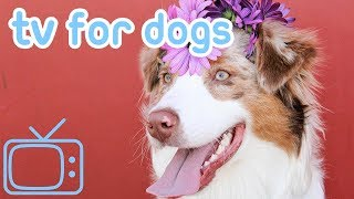 Dog TV! Relaxing TV for Dogs combined with Calming Music to help with Anxiety