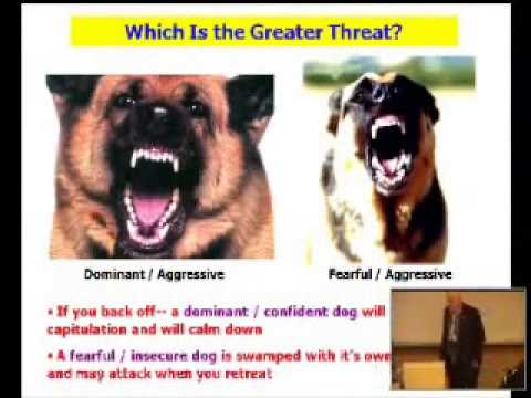 Dog Body Language With Other Dogs of Dog Body Language