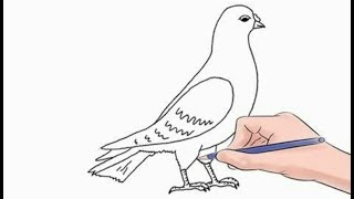 All Clip Of Drawing Pigeon Bhclip Com