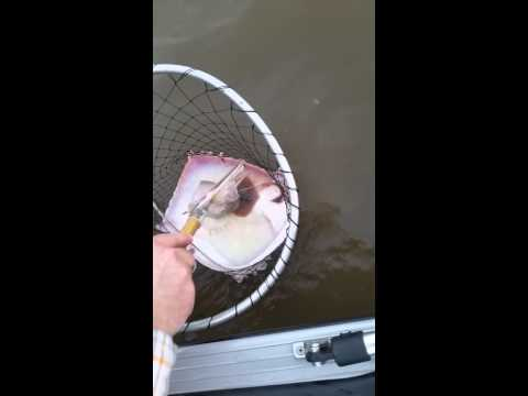 Stingray gives birth on boat in Texas