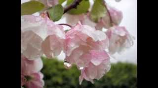 Blooms Of Spring 2011.wmv