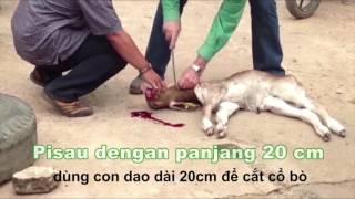 Giết thịt gia súc nhân đạo