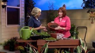 Central Florida Gardening-Building A Fairy Garden