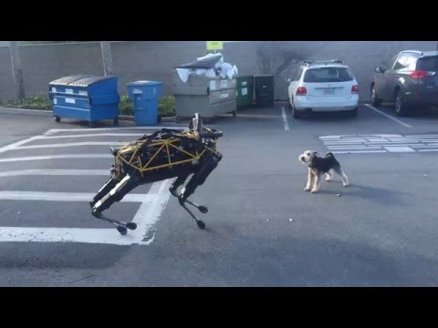 Fido vs Spot — Animal vs Robot