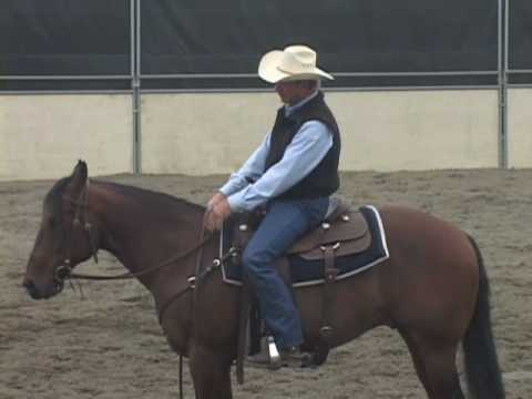 Horse Training for the Stop & Back Up - Basic training to sliding stops for reining & cutting.