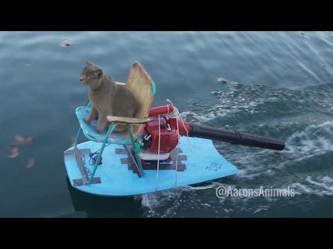猫が自家製ジェットスキーにのる!?CGを駆使した映像が素敵。