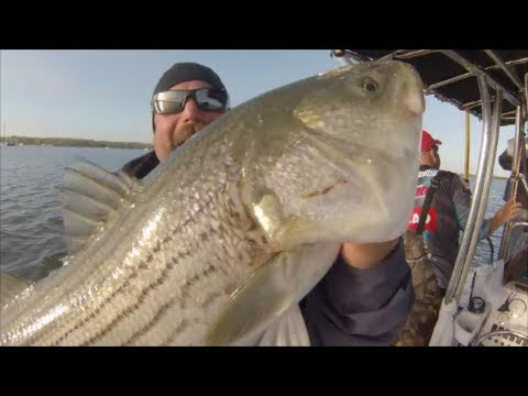 AWESOME STRIPED BASS TRIP!, NJ, NY-TEAM OLD SCHOOL 2013